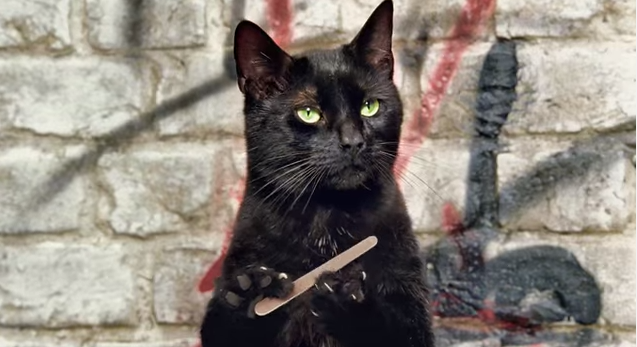 thumbcat